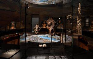 Kranier i udstilling