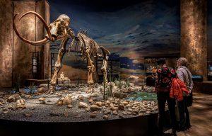 Gæster kigger på mammut