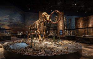 Mammut skelet