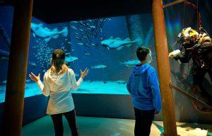 Dykkerrum hvor man kan lege med fiskene i havet